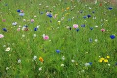 Gebied van bloemen Royalty-vrije Stock Foto's
