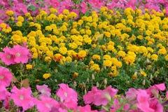 Gebied van bloemen Royalty-vrije Stock Afbeeldingen