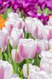 Gebied van bloemen Royalty-vrije Stock Fotografie