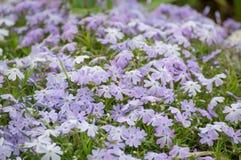Gebied van bloemen Stock Foto's