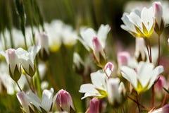 Gebied van bloemen Stock Fotografie