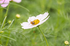 Gebied van bloemen Stock Foto