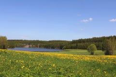 Gebied van Bloemen en Blauwe Hemel Stock Foto