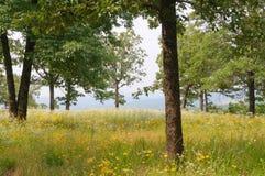 Gebied van bloemen en bomen Stock Foto's