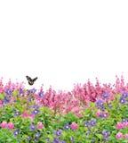 Gebied van Bloemen met Vlinder op Wit wordt geïsoleerd dat royalty-vrije stock afbeeldingen