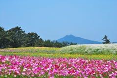 Gebied van bloemen met vulkaan stock foto's