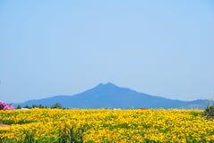 Gebied van bloemen met vulkaan royalty-vrije stock afbeelding