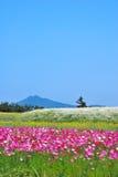 Gebied van bloemen met vulkaan stock foto