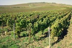 Gebied van Champagne in Frankrijk stock foto's