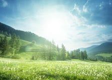 Gebied van de lentepaardebloemen in Dolomiet Stock Foto