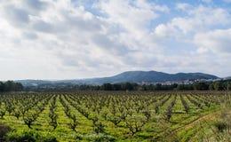 Gebied van de wijnstokken vroege lente in Spanje Royalty-vrije Stock Afbeeldingen