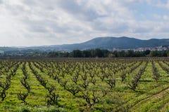 Gebied van de wijnstokken vroege lente in Spanje Royalty-vrije Stock Fotografie
