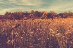Gebied van droge zonnebloemen Langzaam verdwenen de herfstachtergrond stock fotografie
