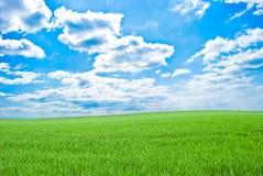 Gebied van een groen gras, hemel met wolken stock afbeelding