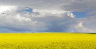 Gebied van geel koolzaad in de lente Stock Afbeelding