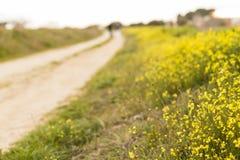 Gebied van gele bloemen dicht bij een weg Landelijke levensstijl stock afbeelding