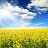 Gebied van gele bloemen en zonhemel Stock Foto