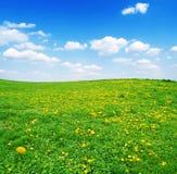 Gebied van gele paardebloemen en blauwe bewolkte hemel Royalty-vrije Stock Afbeelding