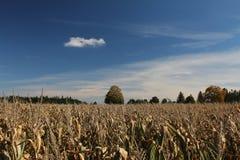 Gebied van graan in de herfst Stock Afbeelding