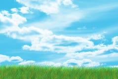 Gebied van gras Stock Illustratie