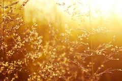 Gebied van gras bij zonsondergang Stock Afbeelding