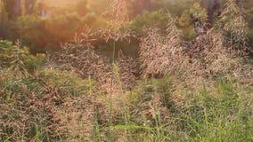 Gebied van gras en zonsondergang stock videobeelden