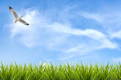 Gebied van gras onder hemel en vliegende vogel Royalty-vrije Stock Fotografie