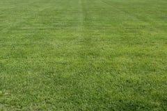 Gebied van groen gras Stock Foto