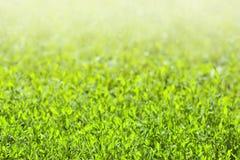 Gebied van groen gras Stock Afbeelding