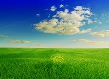 Gebied van groen gras en blauwe bewolkte hemel Royalty-vrije Stock Foto