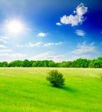 Gebied van groen gras en blauwe bewolkte hemel Royalty-vrije Stock Foto's