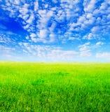 Gebied van groen gras en blauwe bewolkte hemel Royalty-vrije Stock Afbeelding