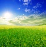 Gebied van groen gras en blauwe bewolkte hemel Stock Foto