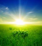 Gebied van groen gras en blauwe bewolkte hemel royalty-vrije stock afbeeldingen