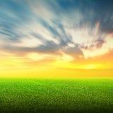 Gebied van groene gras en hemel Stock Foto