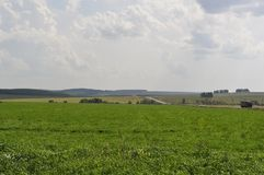 Gebied van groene grasrek in de afstand Royalty-vrije Stock Afbeelding