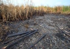 Gebied van het gras werd gebrand Stock Foto