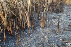Gebied van het gras werd gebrand Stock Fotografie
