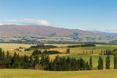 Gebied van het het hoogland het groene glas van Nieuw Zeeland met bergachtergrond royalty-vrije stock afbeelding