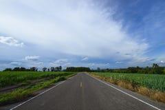 Gebied van het weg het middensuikerriet Stock Foto's