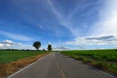 Gebied van het weg het middensuikerriet Royalty-vrije Stock Foto