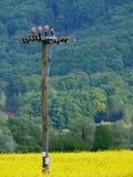 Gebied van installaties voor biobrandstof   royalty-vrije stock foto's
