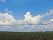 Gebied van jonge groene tarwe op de lente Royalty-vrije Stock Afbeeldingen