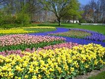 Gebied van kleurrijke de lentebloemen Royalty-vrije Stock Afbeeldingen