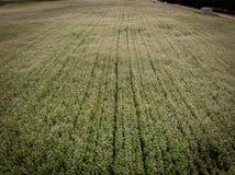 Gebied van landbouwraapzaadbloemen stock afbeeldingen