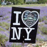 Gebied van lavendel 3 Royalty-vrije Stock Afbeelding