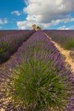 Gebied van lavendel Stock Foto's