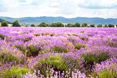 Gebied van lavendel Royalty-vrije Stock Foto
