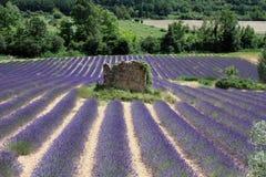 Gebied van lavendel met een geruïneerde roek in het midden Stock Afbeelding