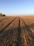 Gebied van maïsstoppelveld in de herfst, Somerset, Engeland royalty-vrije stock foto's